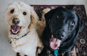 5 самых известных фактов о собаках.