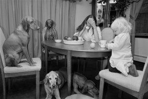 Таинственные отношения между домашними животными и их владельцами.